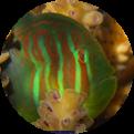Marine Science Portal